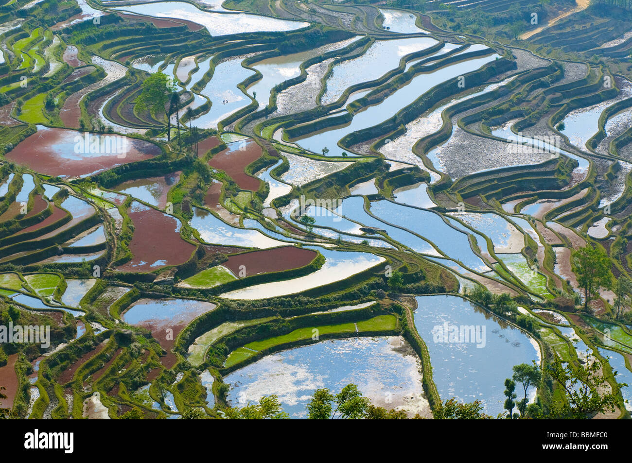 Les rizières en terrasses de yuanyang yunnan chine Photo Stock