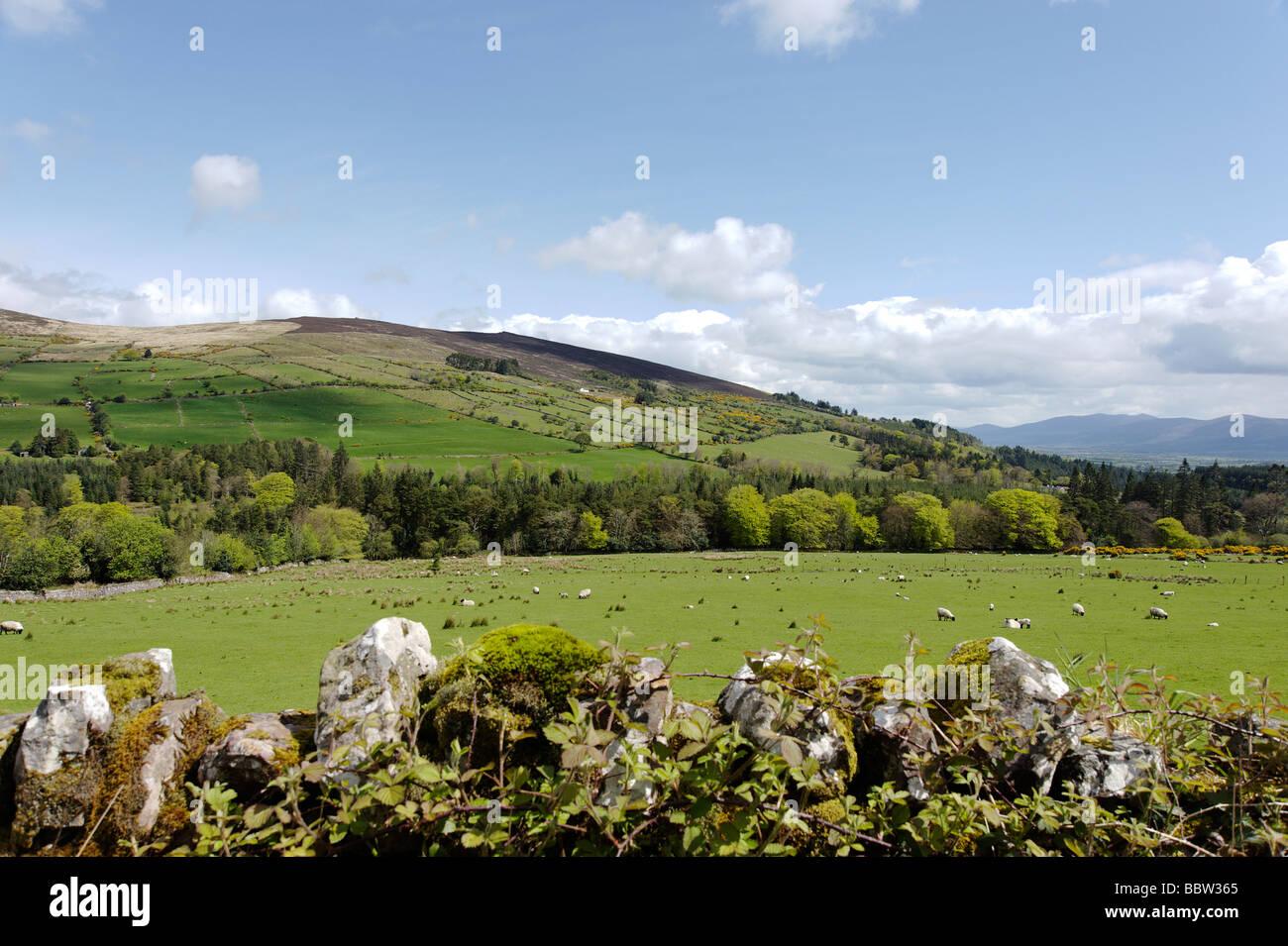 Donnant sur mur en pierre sèche de vertes collines et de terres agricoles dans la région de Clonmel dans Photo Stock