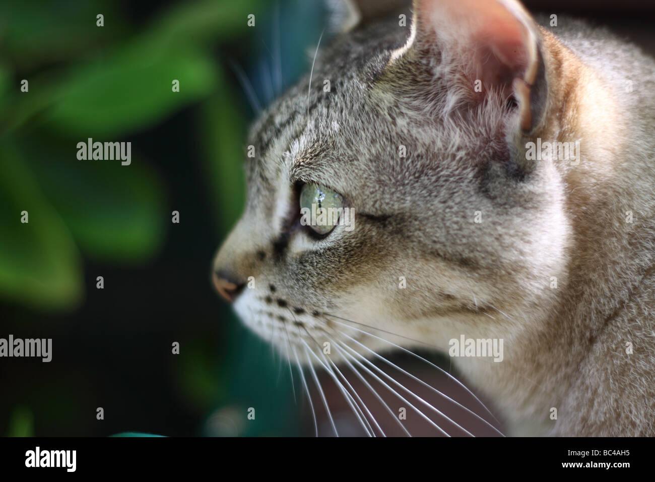 gratuit asiatique adolescent chatte ébène chatte coups