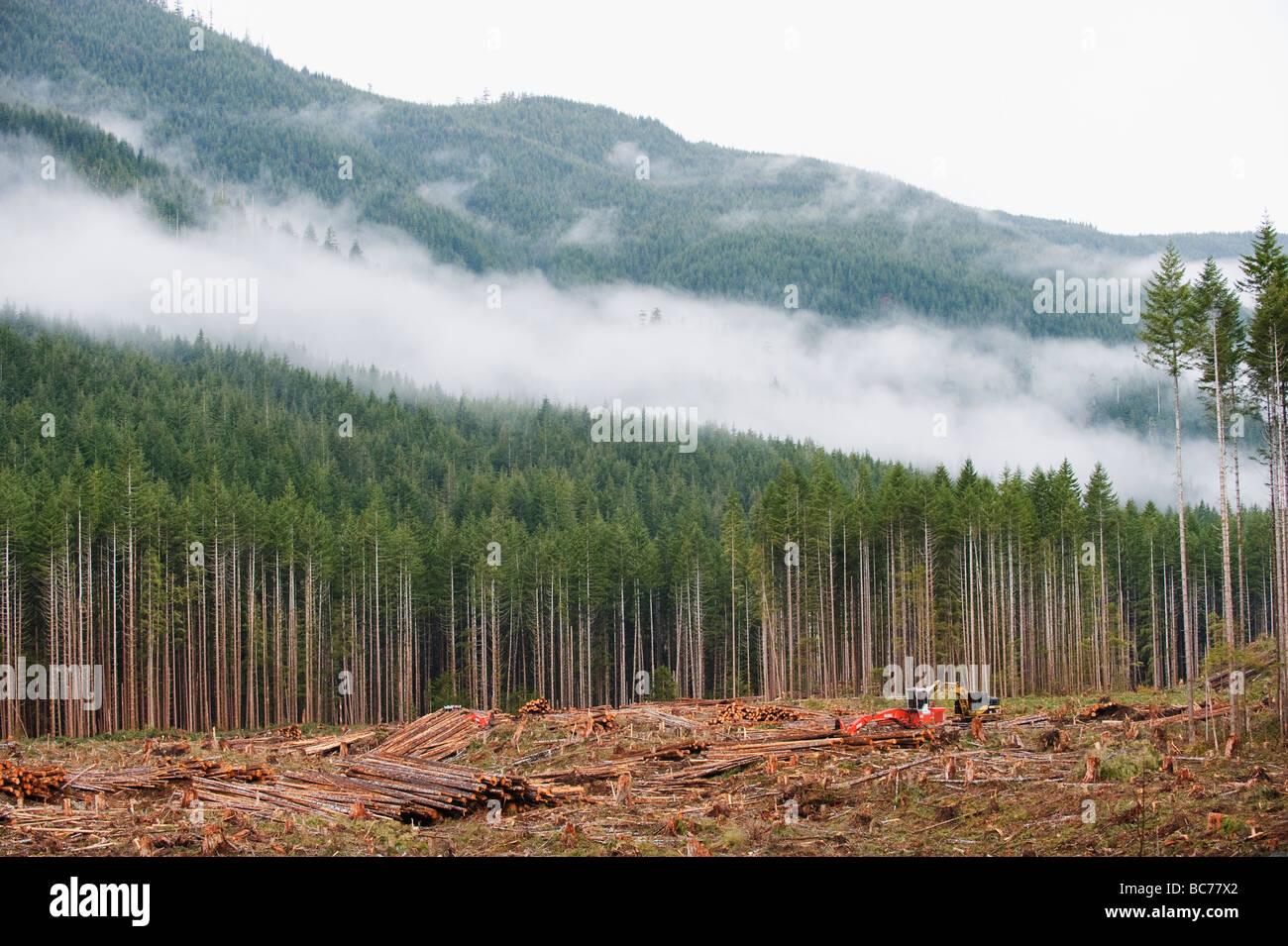 La déforestation dans le parc provincial de la Carmanah Walbran l'île de Vancouver, British Columbia Photo Stock