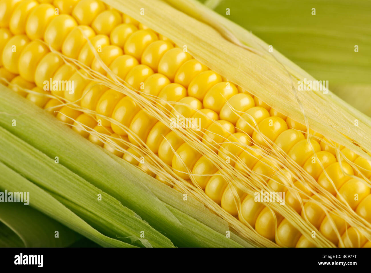 Close up of corn on the cob Banque D'Images