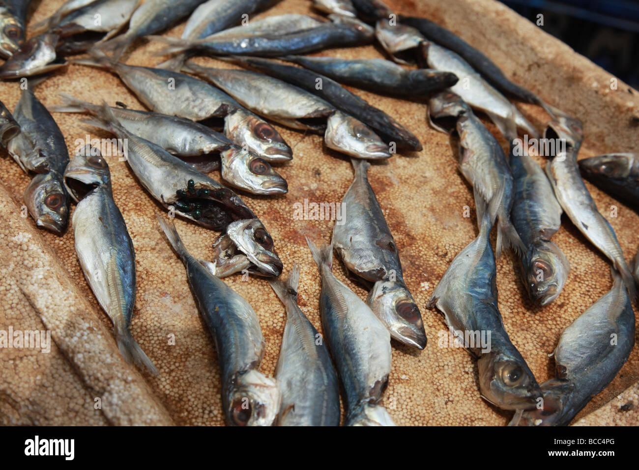 Vente de poissons sur le marché dans le Connemara, Trivandrum, Kerala, Inde Banque D'Images