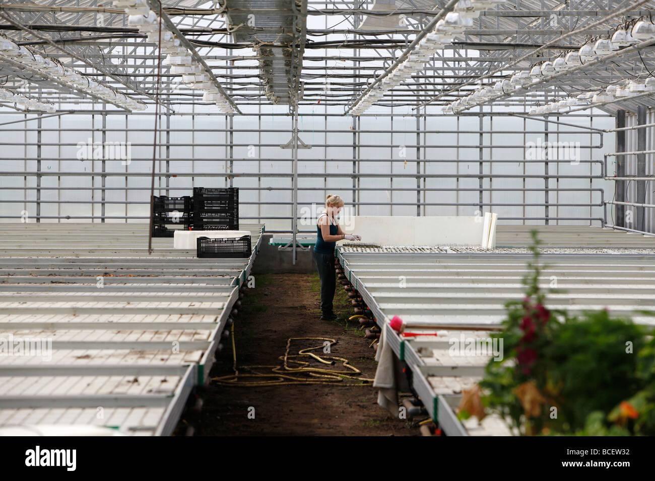 L'intérieur d'un travailleur, l'Islande serre chauffée par géothermie Photo Stock