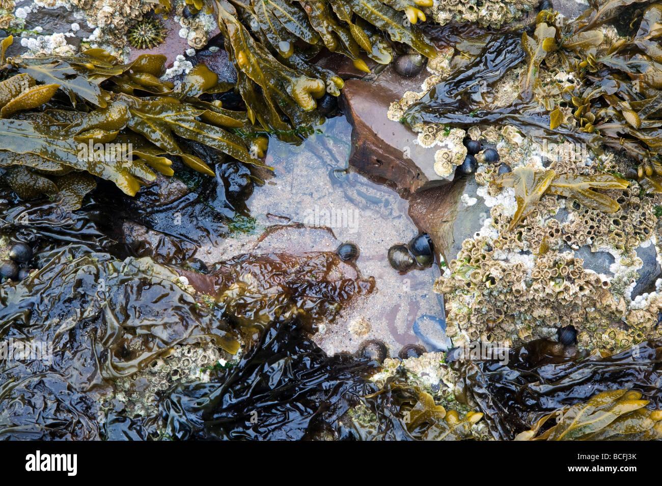 Piscine dans les rochers à marée basse Dharamsala Photo Stock