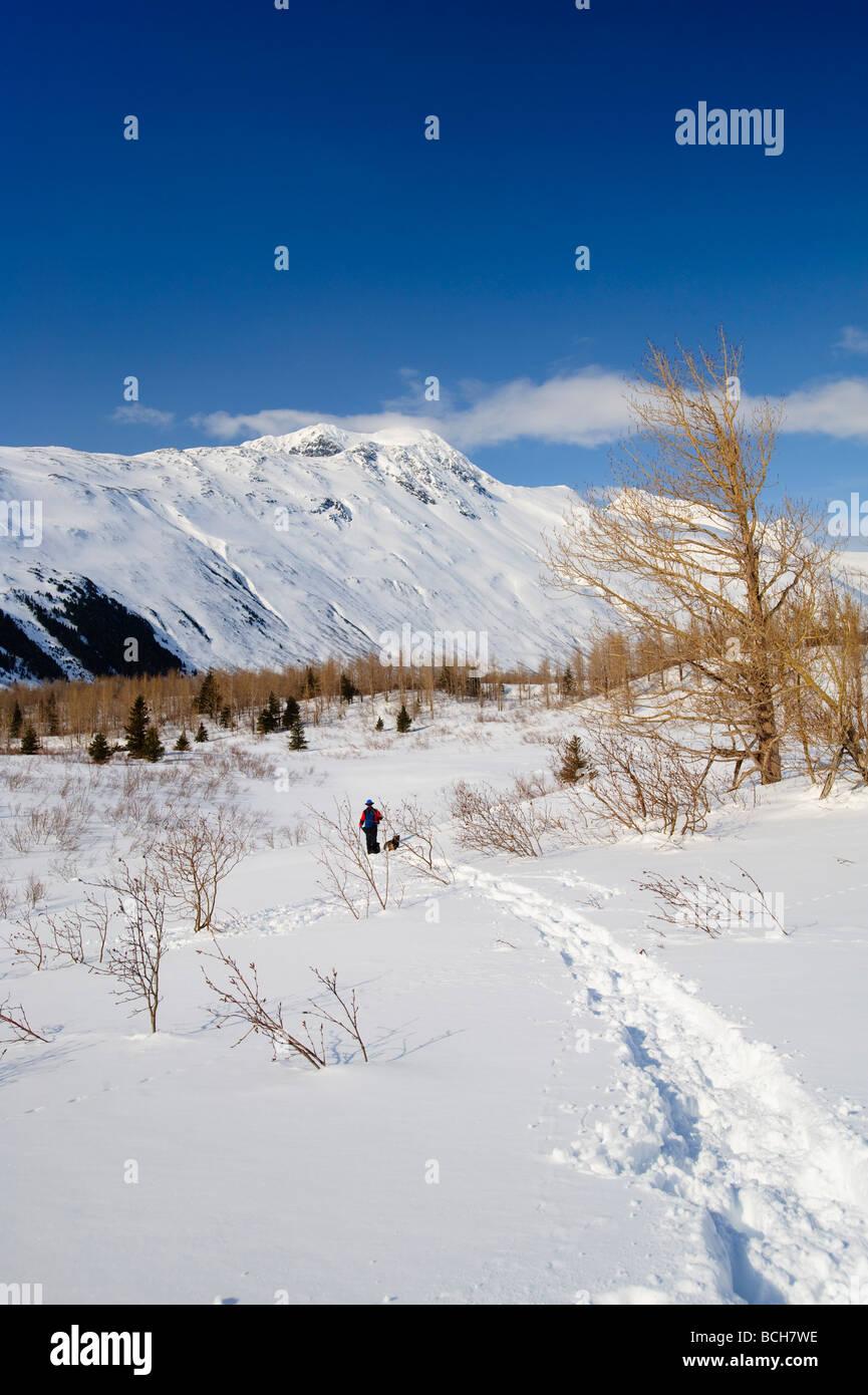 Un homme et ses chiens, raquette dans la vallée de l'ours avec les montagnes Chugach en arrière-plan Photo Stock