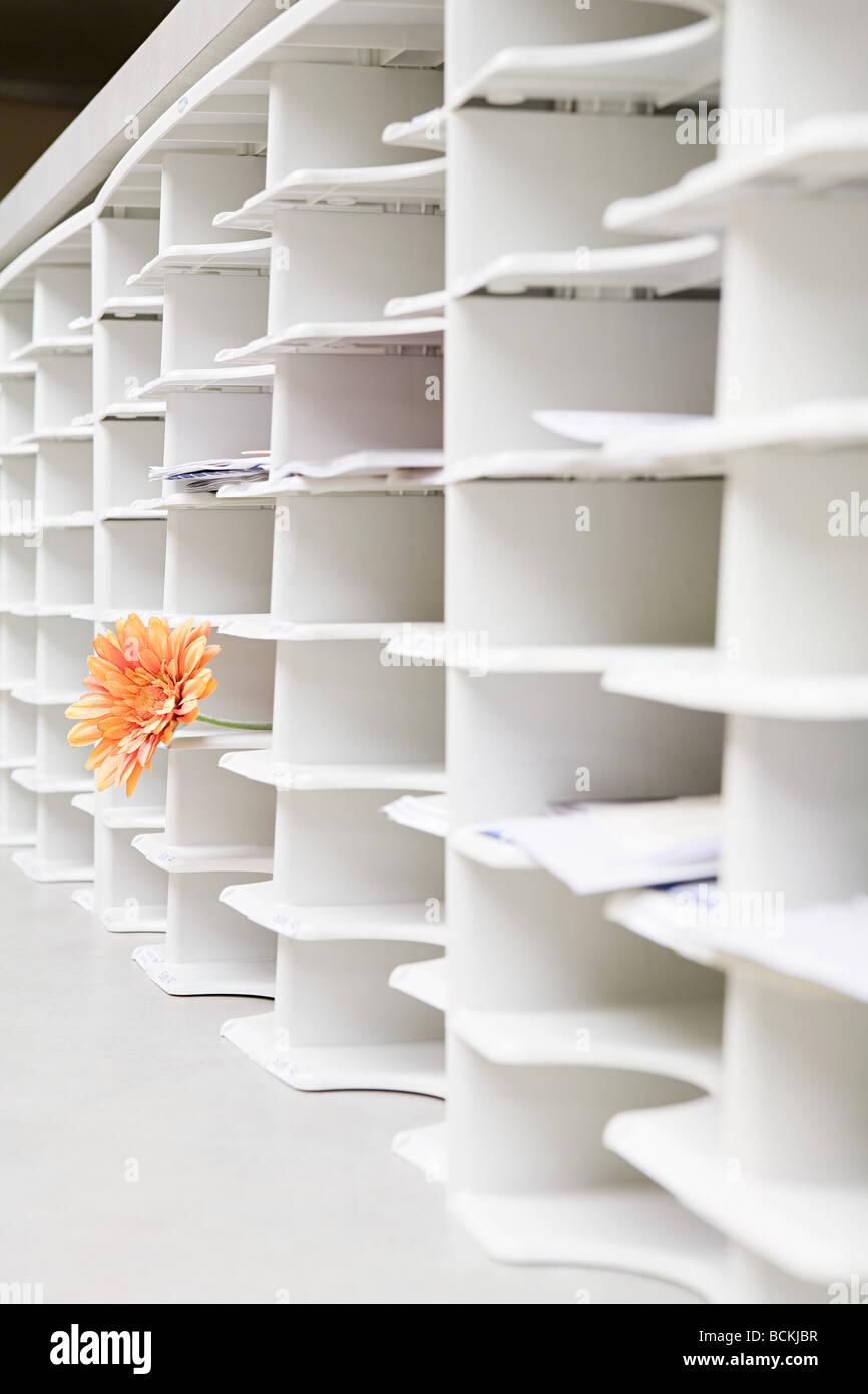 Des rangées de trous de rangement de bureau avec une fleur qui sort de l'un Photo Stock