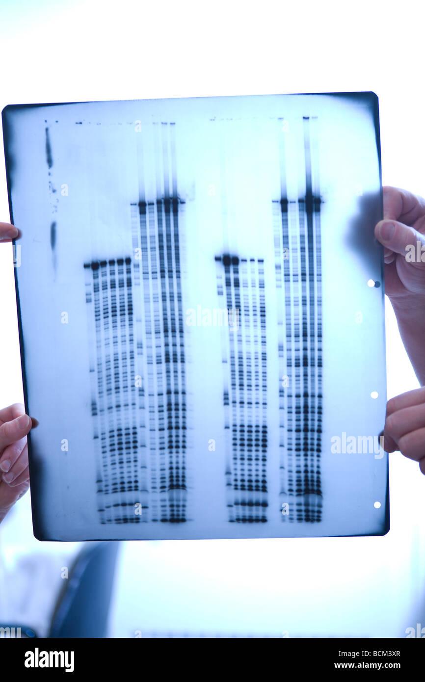 Données scientifiques sur film transparent Photo Stock