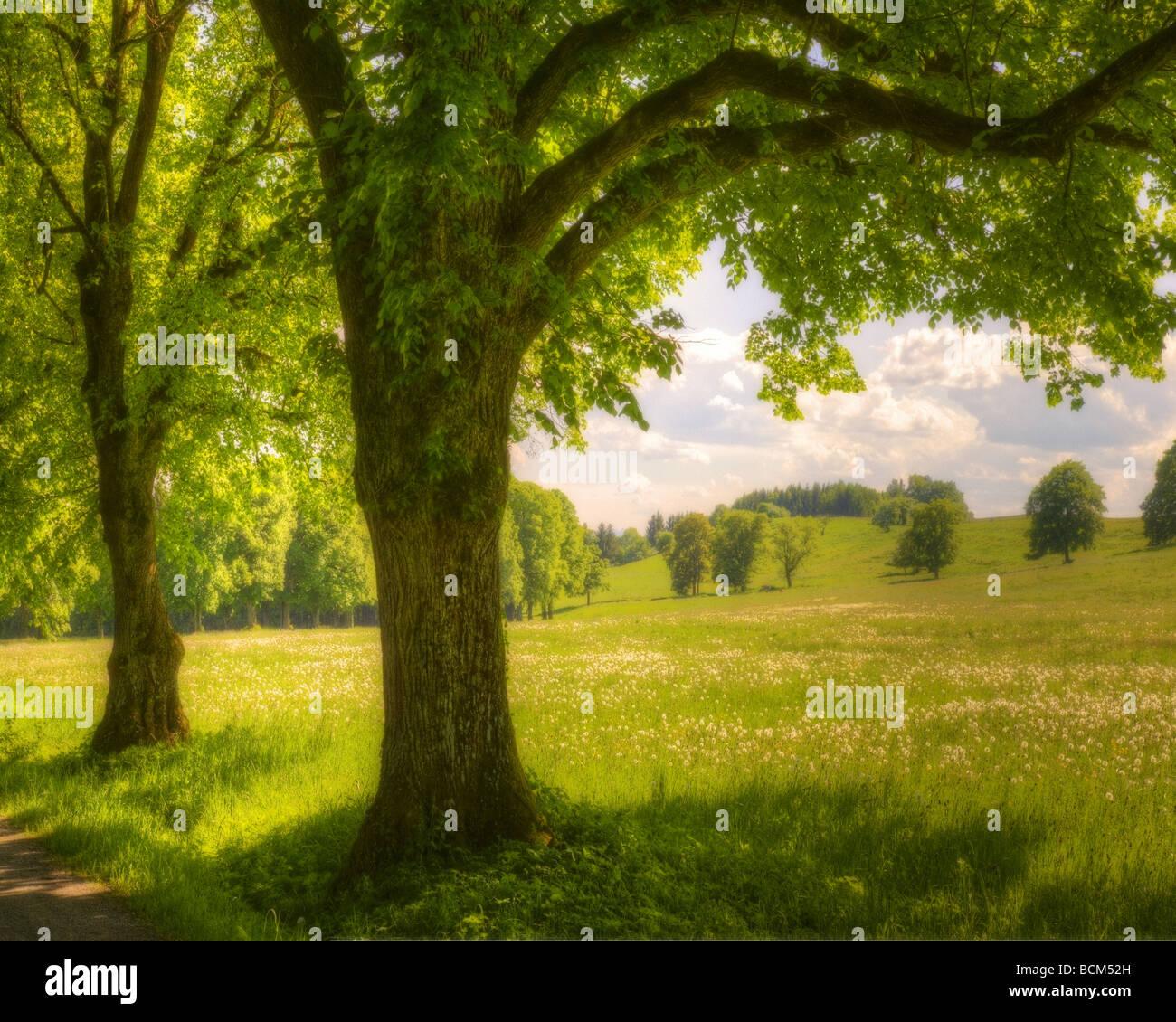 DE - La Bavière: Summertime près de Milton Photo Stock