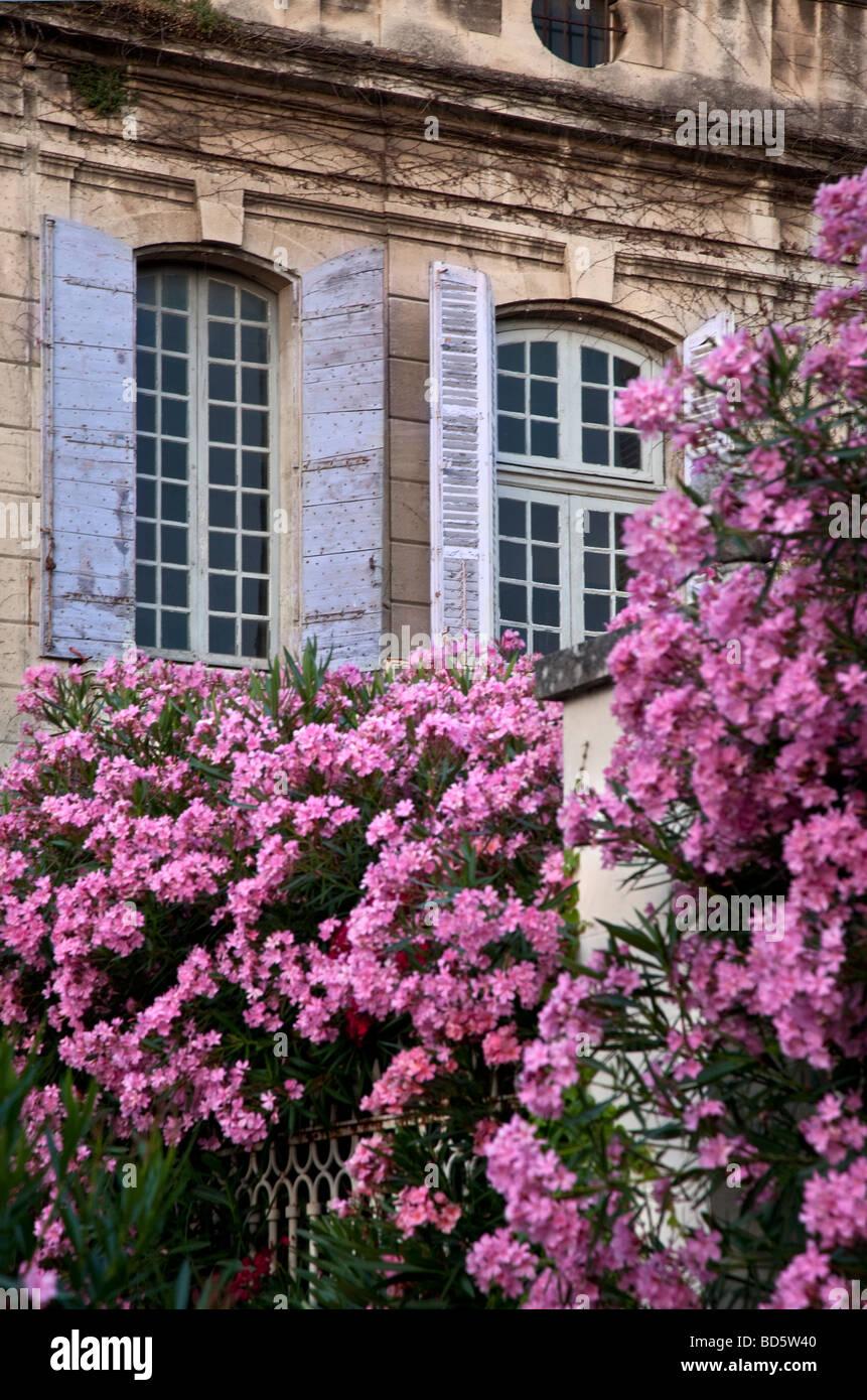 Mad trucker 2 fleurs roses en face d'une maison aux volets bleus à St Remy de Provence France Photo Stock