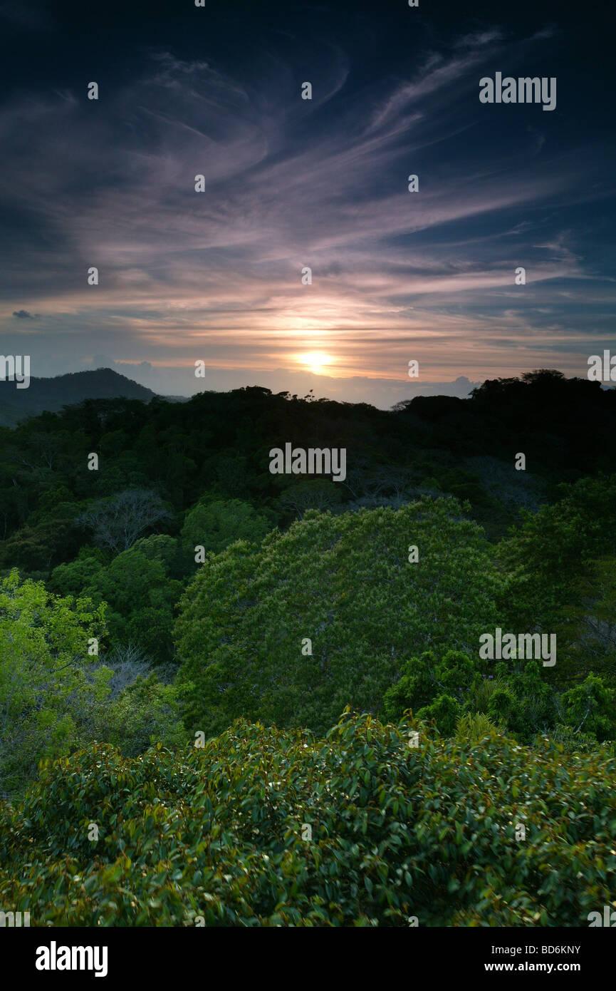Soirée dans le parc national de Soberania, République du Panama. Banque D'Images