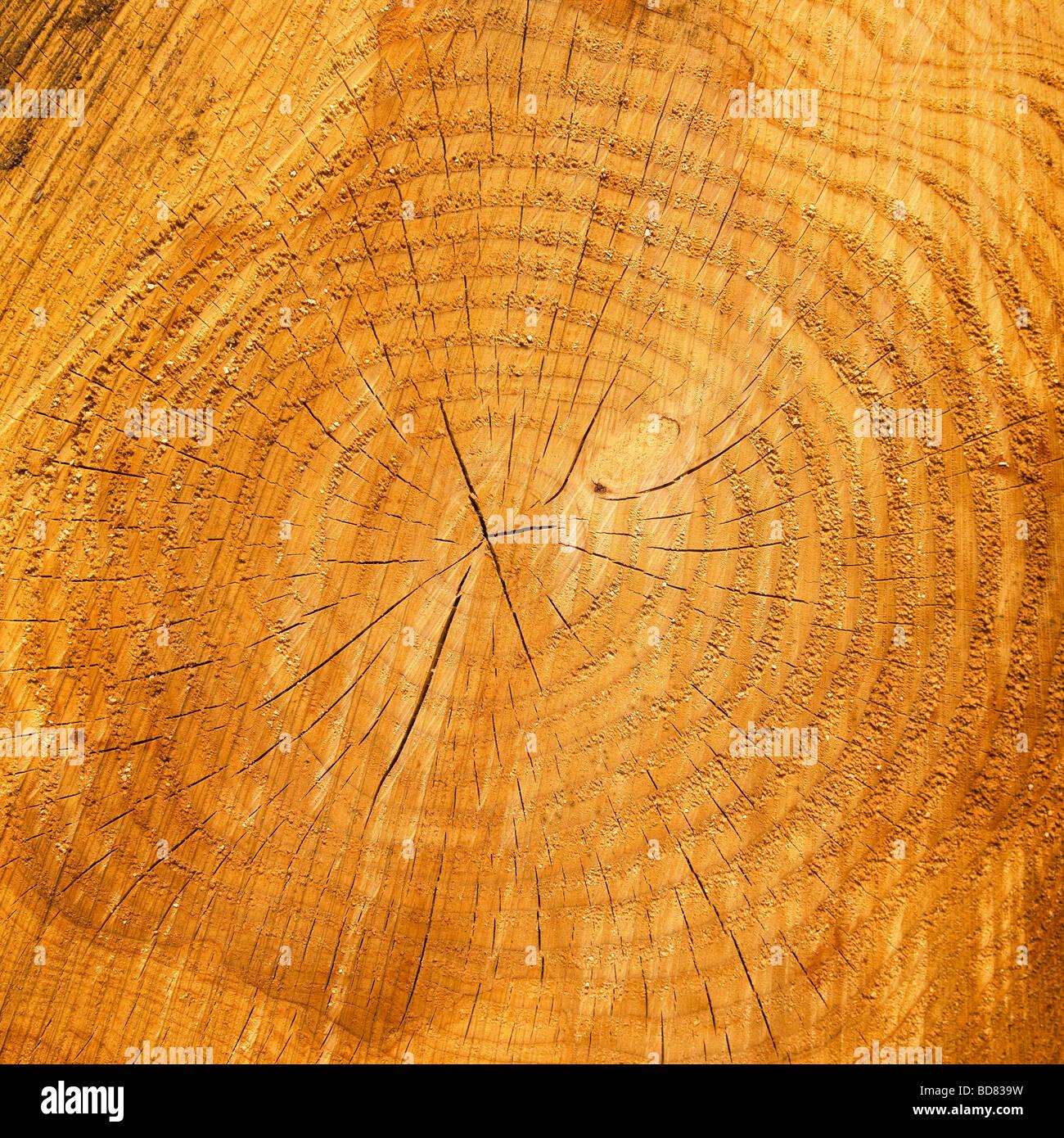 Les anneaux de croissance sur un tronc d'arbre. Photo Stock