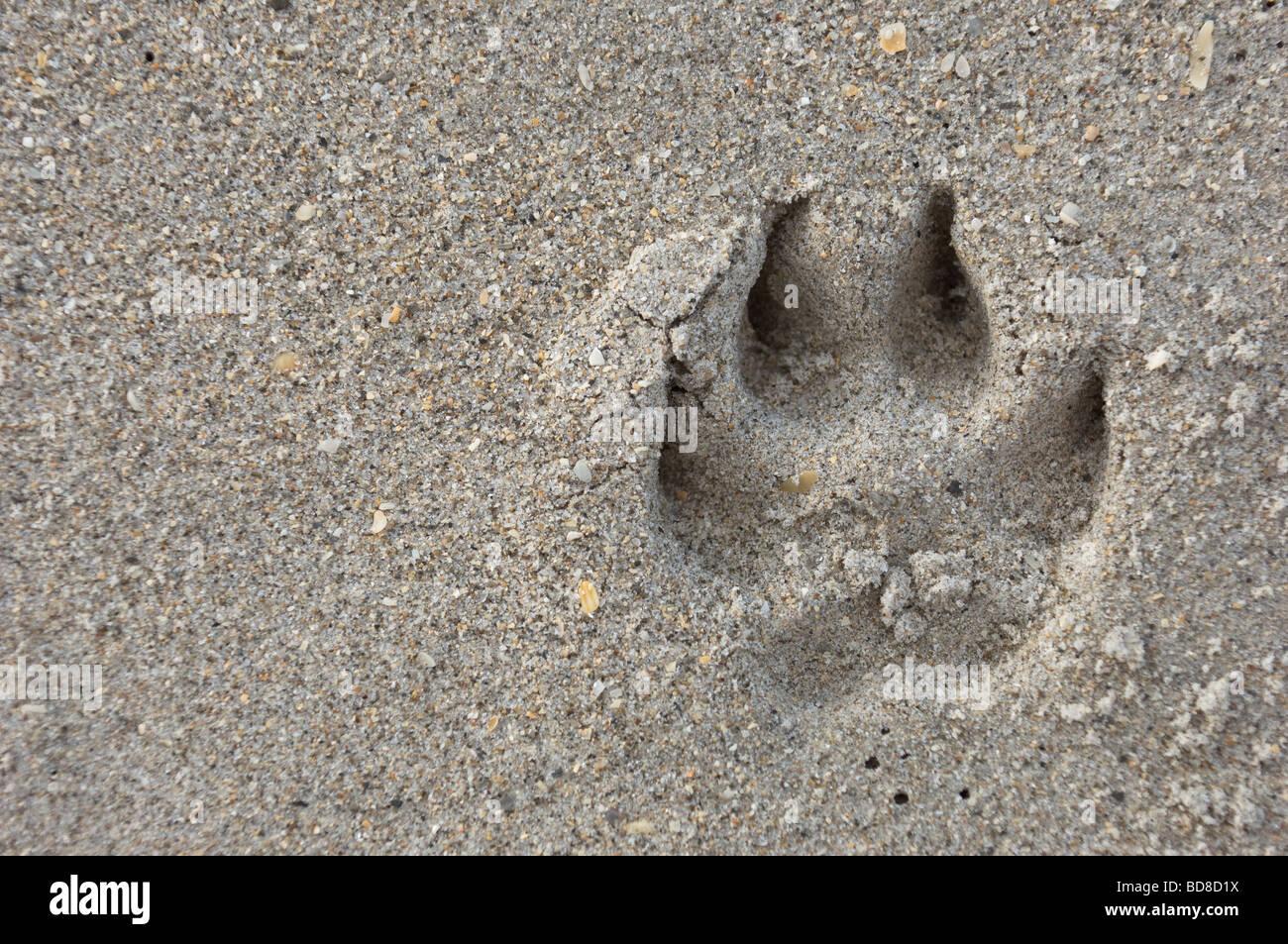Empreinte de faire impression dans le sable Photo Stock