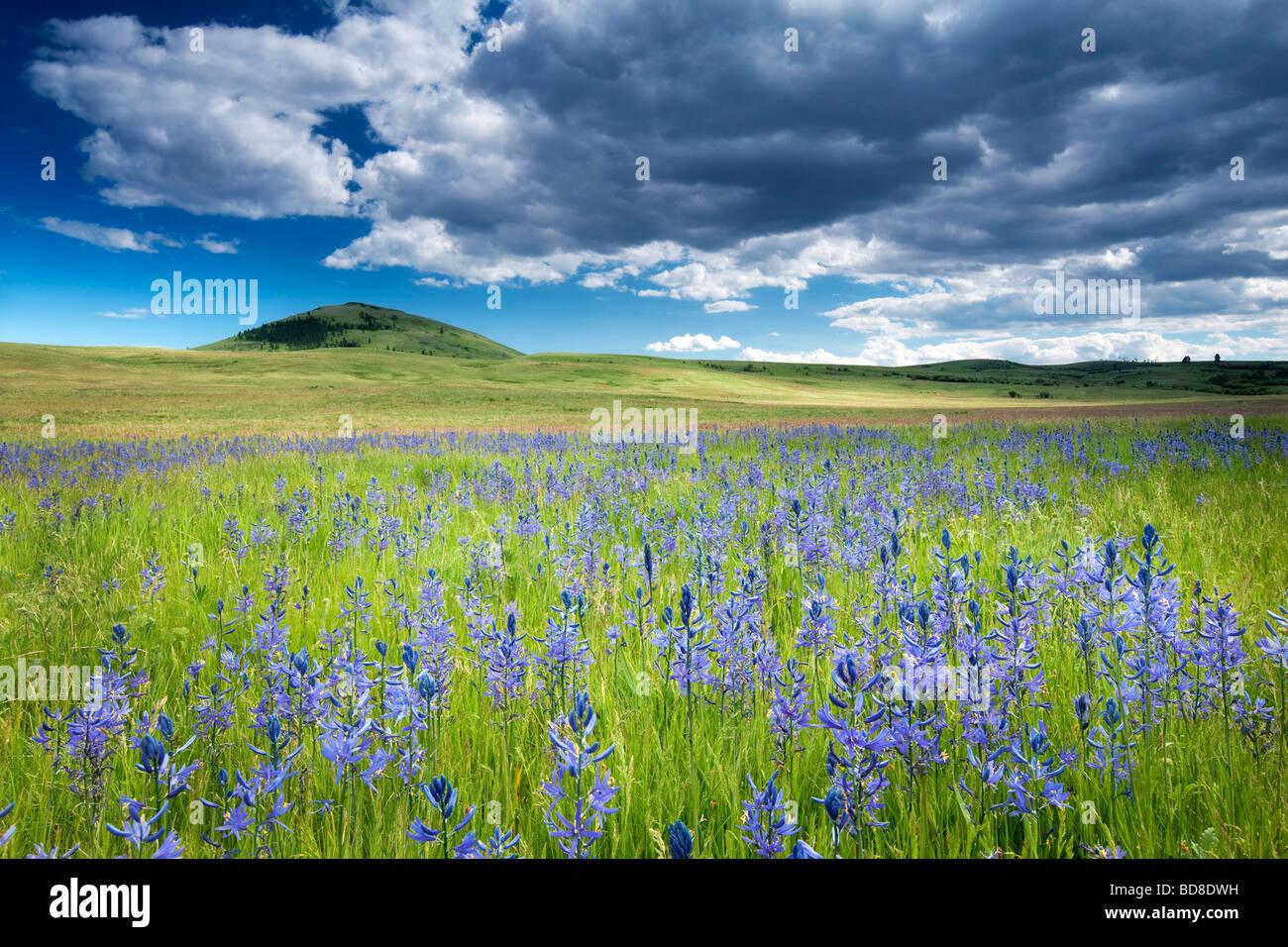 Camas prairie avec des nuages de tempête et de prairie à Zumwalt Oregon Photo Stock