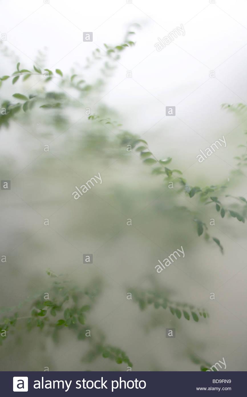 Plantes de jardin vert vu à travers le verre dépoli Photo Stock