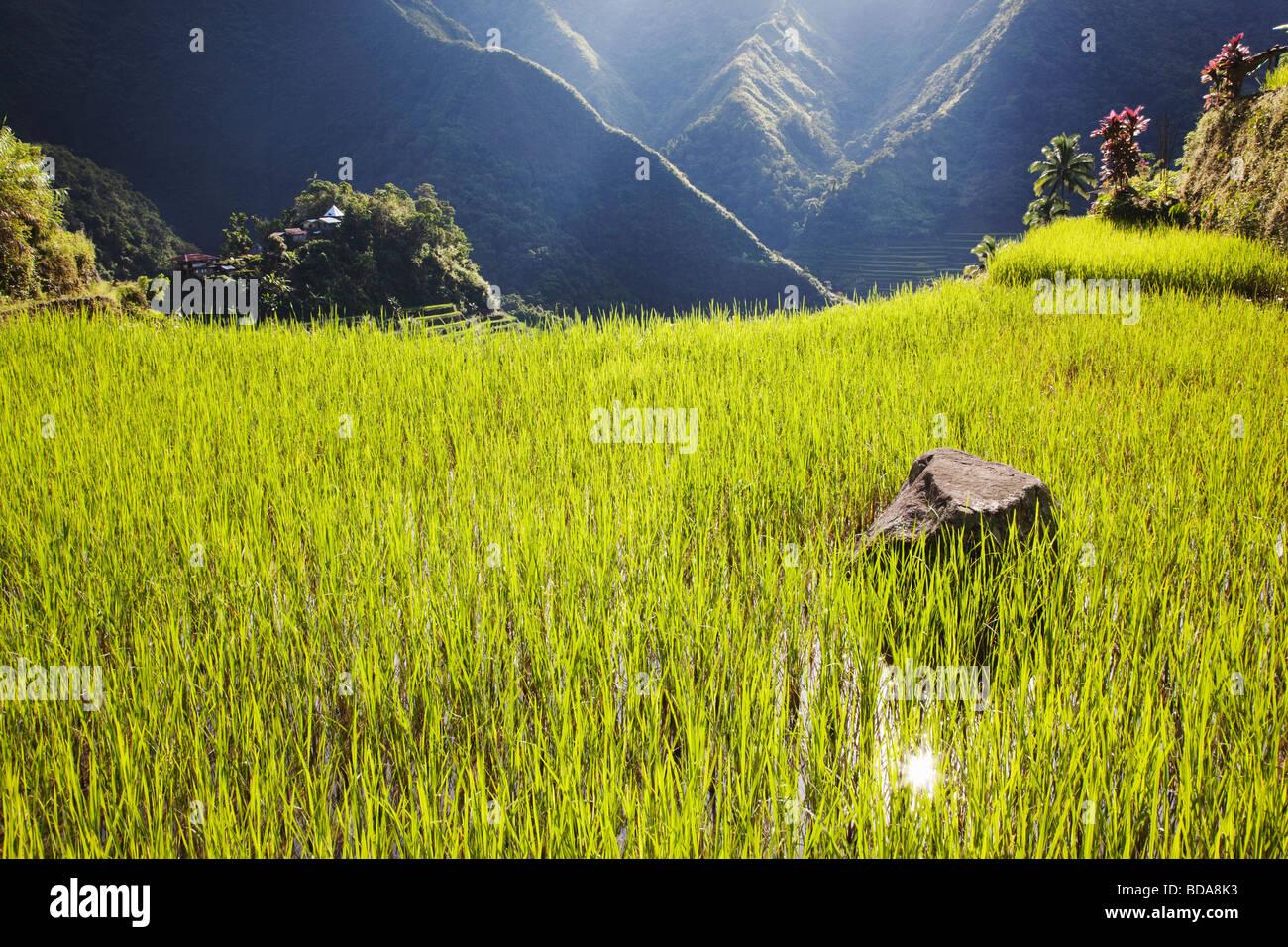 Terrasses de riz de la Province d'Ifugao Batad le nord de Luzon aux Philippines Photo Stock