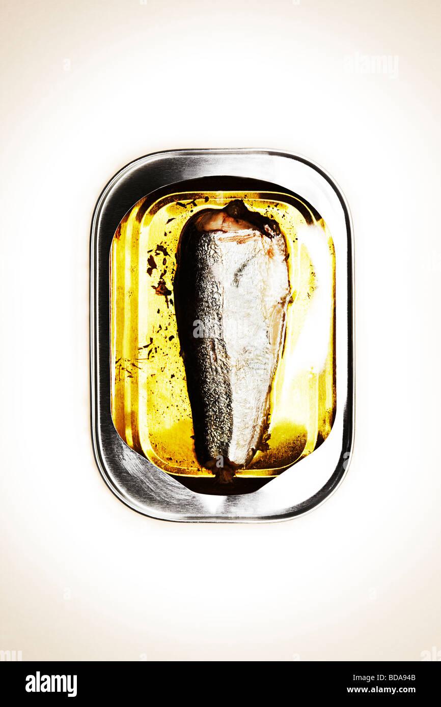 Seul dans une boîte de sardines Photo Stock