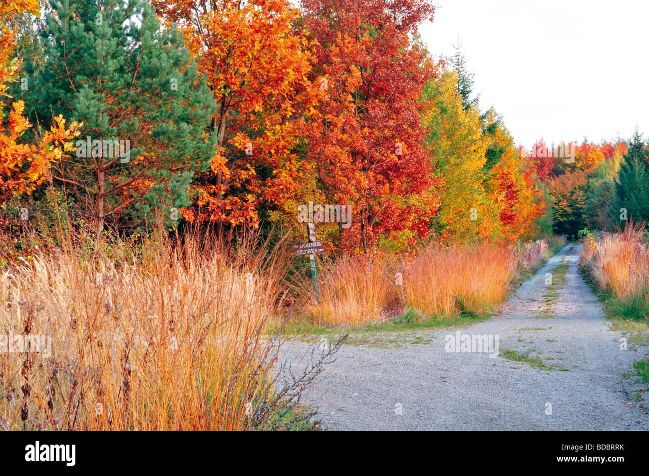 L'Allemagne, l'Odenwald: Walking cours à Hirschberg dans Limbach Banque D'Images