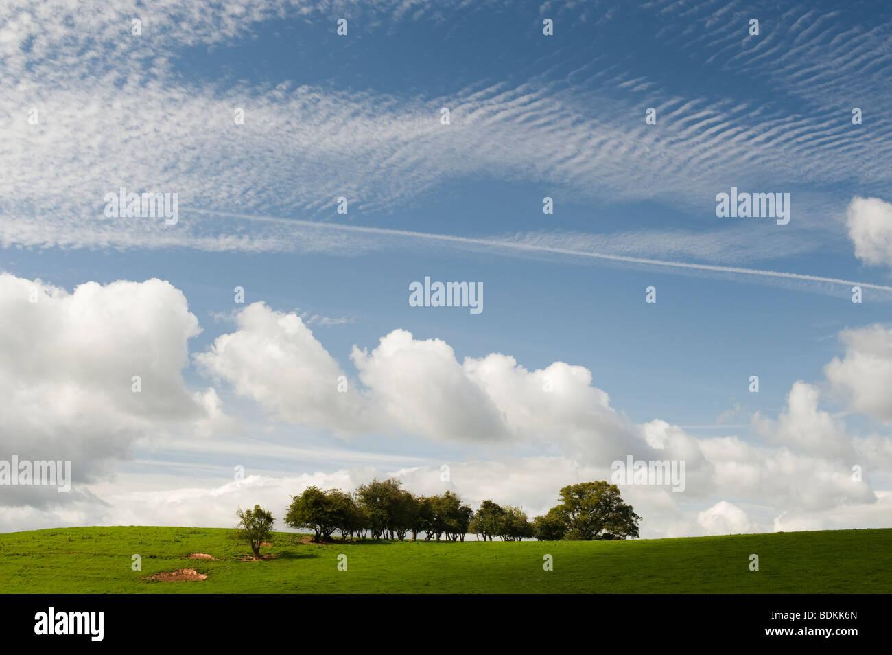 Shropshire Rural campagne près de Ludlow, vert gazon, arbres et ciel nuageux ciel d'été bleu Photo Stock