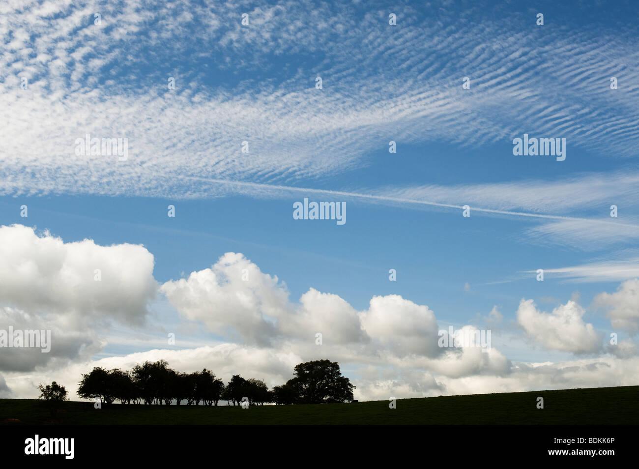 Shropshire Rural campagne près de Ludlow, silhouette des arbres et nuages d'été bleu ciel. UK Photo Stock