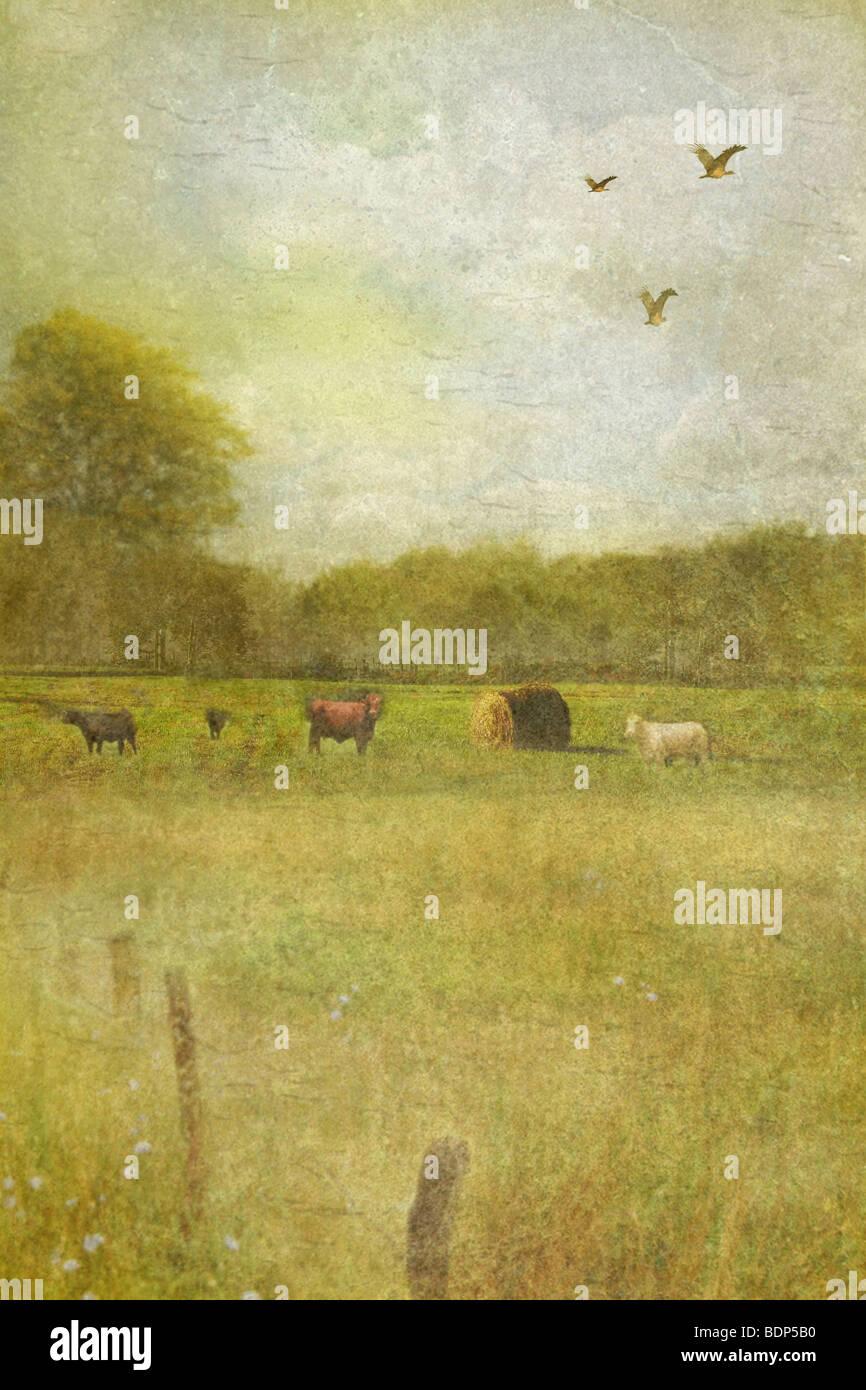 Scène de pays doux avec des champs et d'arbres et quelques animaux de ferme Photo Stock