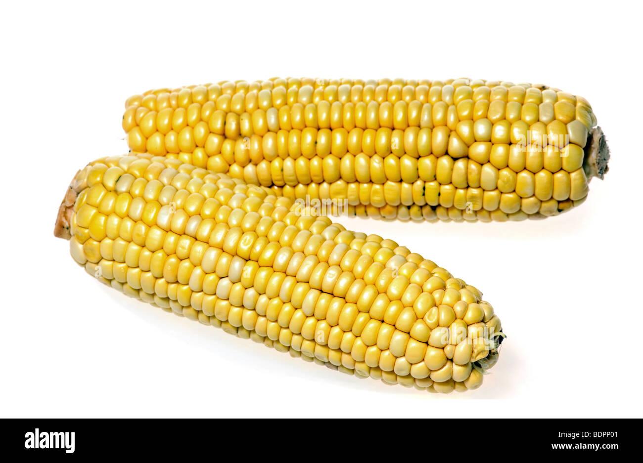 Deux épis de maïs isolé sur fond blanc Photo Stock