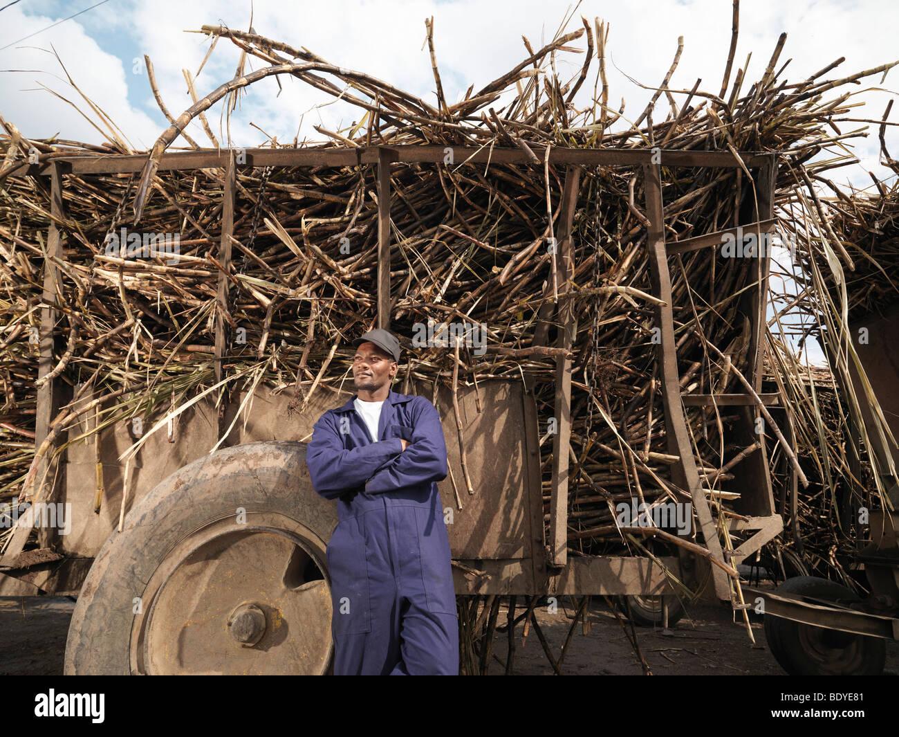 Chariot avec des travailleurs de la canne à sucre Photo Stock