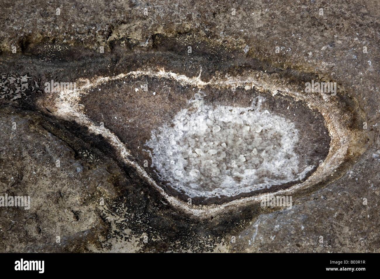 Les cristaux de sel de mer, séché dans un pool de rock Photo Stock