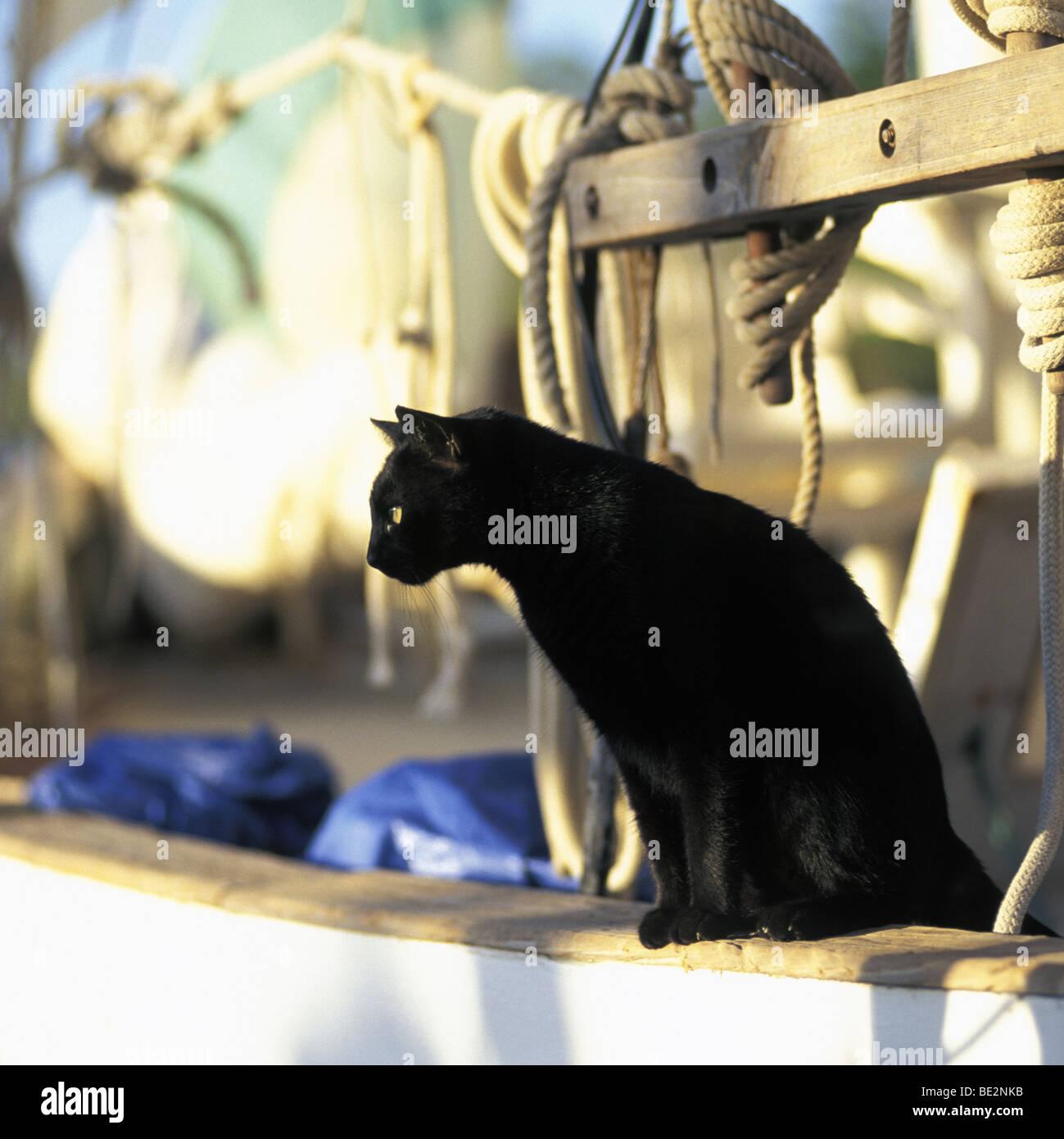 Laide chatte noire