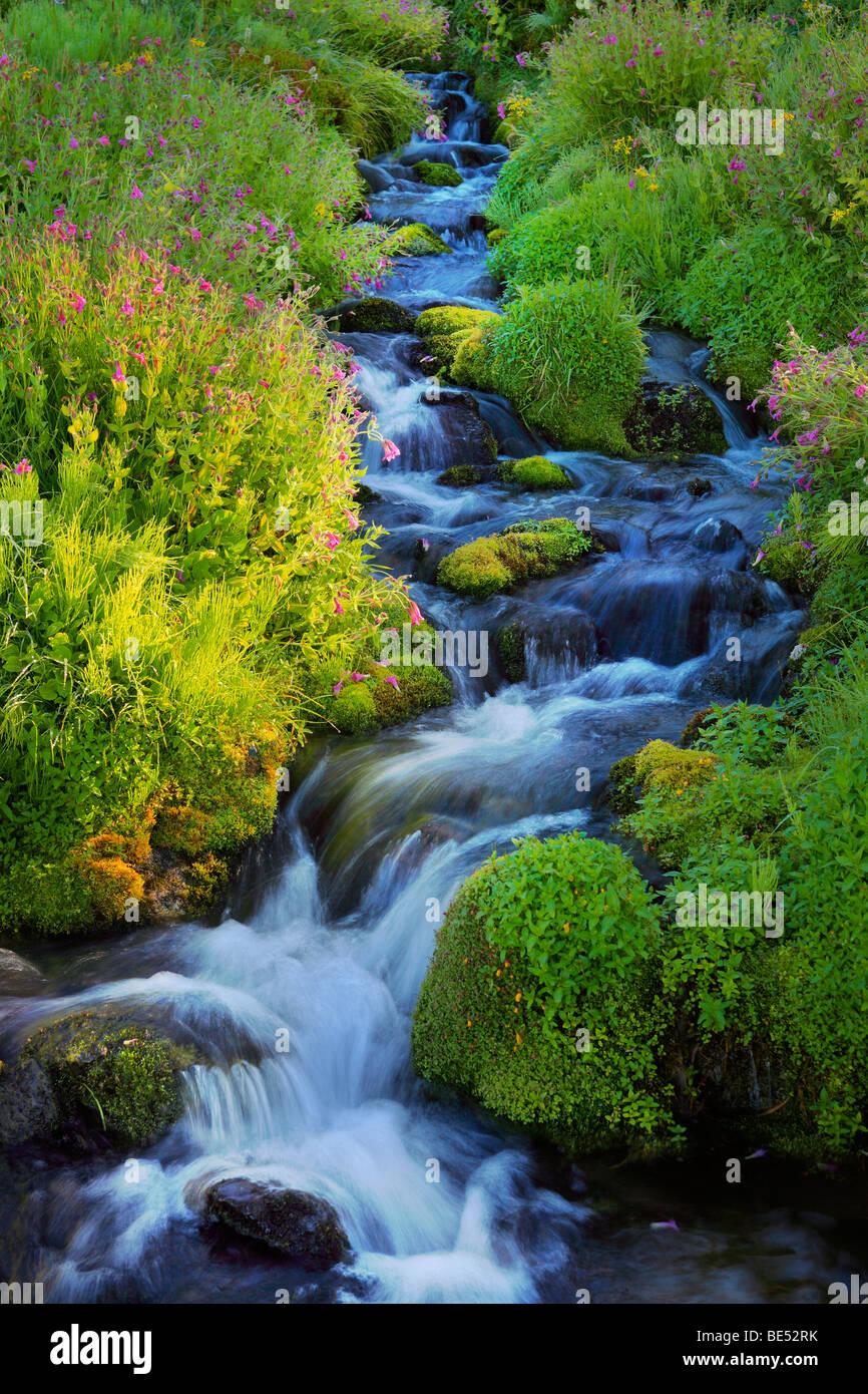 Paradise Creek dans le Parc National de Mount Rainier Photo Stock