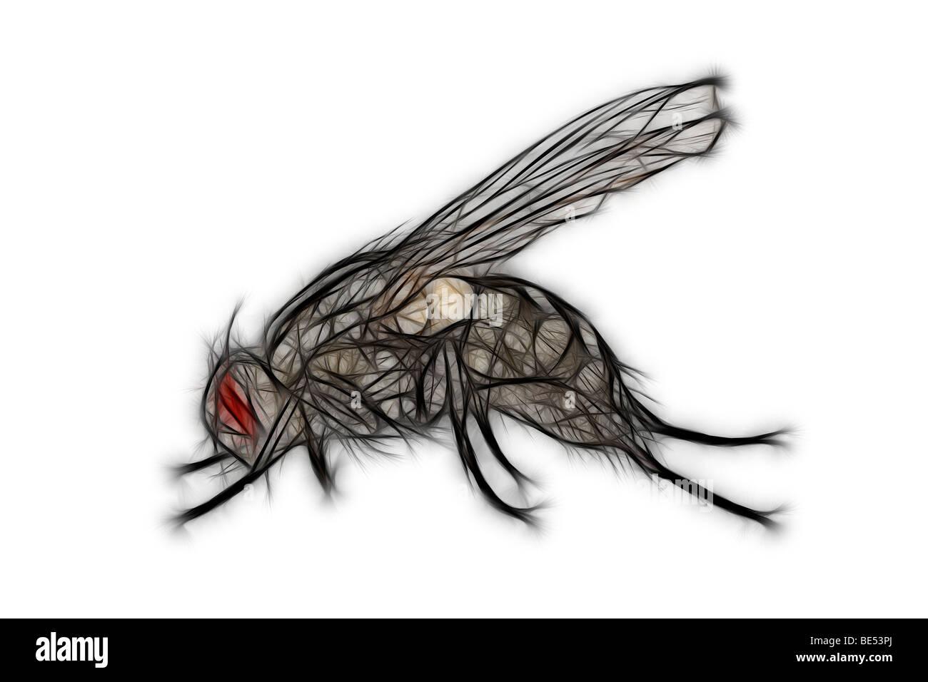 Illustré numériquement une mouche sur un fond blanc. Dessin assisté par ordinateur d'une mouche Photo Stock