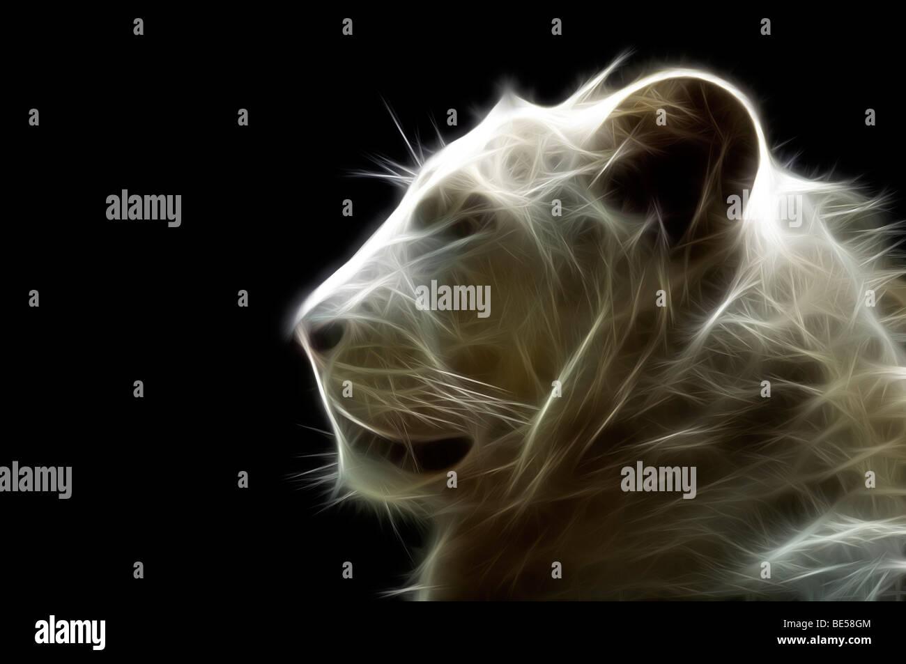 Un chef d'un illustré numériquement white lion (Panthera leo). Portrait d'un lion blanc ( Dessin assisté par ordinateur). Banque D'Images
