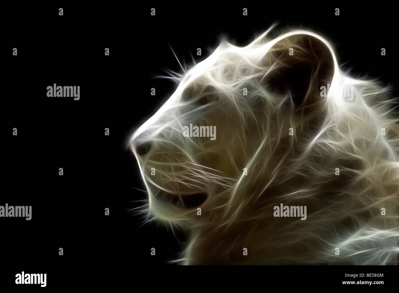 Un chef d'un illustré numériquement white lion (Panthera leo). Portrait d'un lion blanc ( Dessin Photo Stock