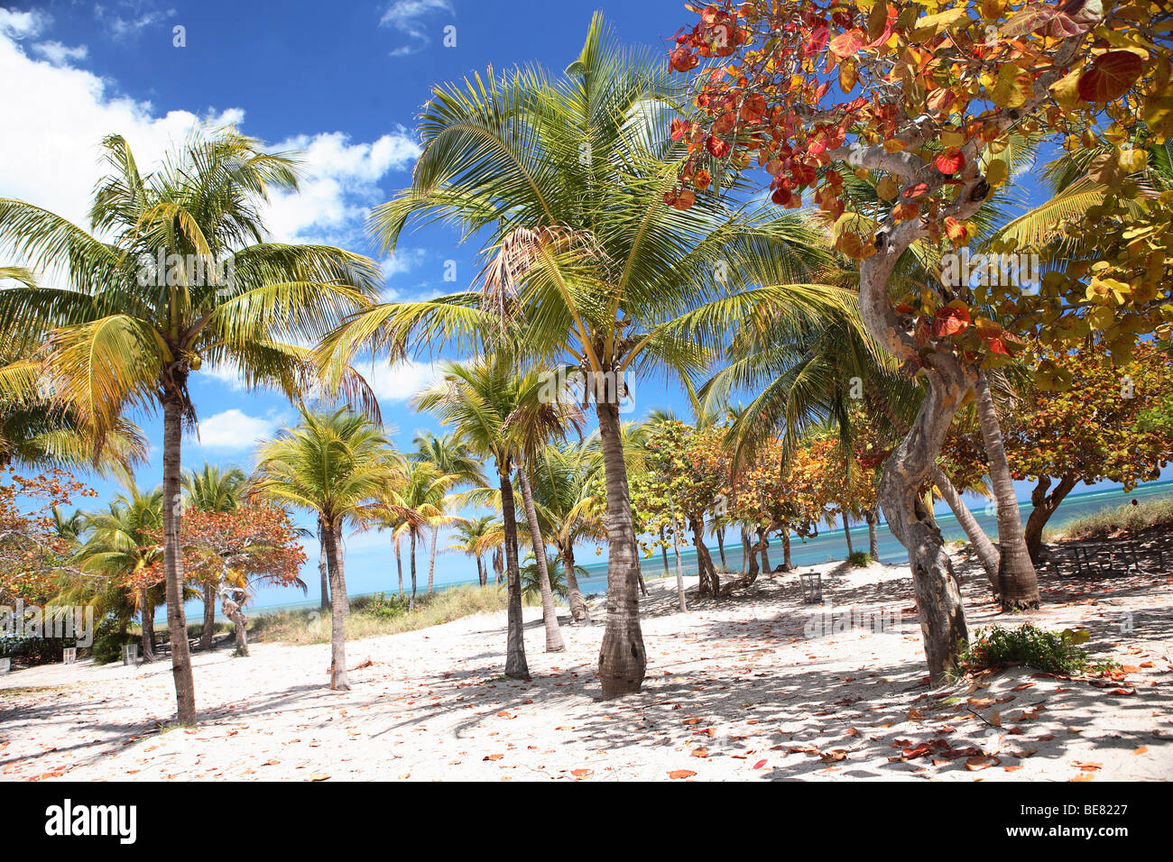 Crandon Park Photos   Crandon Park Images - Alamy c9918a992a9