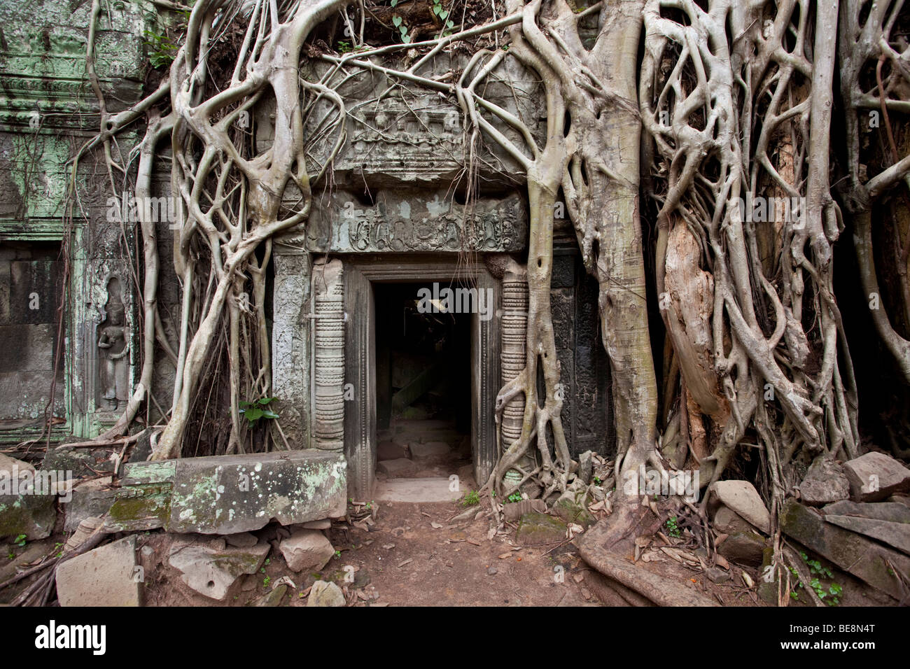 Vue emblématique de Ta Prohm à Angkor Wat, au Cambodge complexe Photo Stock