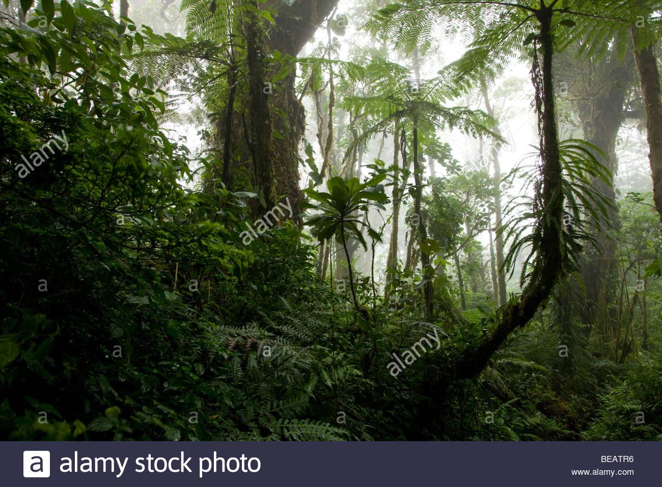 La Réserve Biologique de Santa Elena, Costa Rica Photo Stock