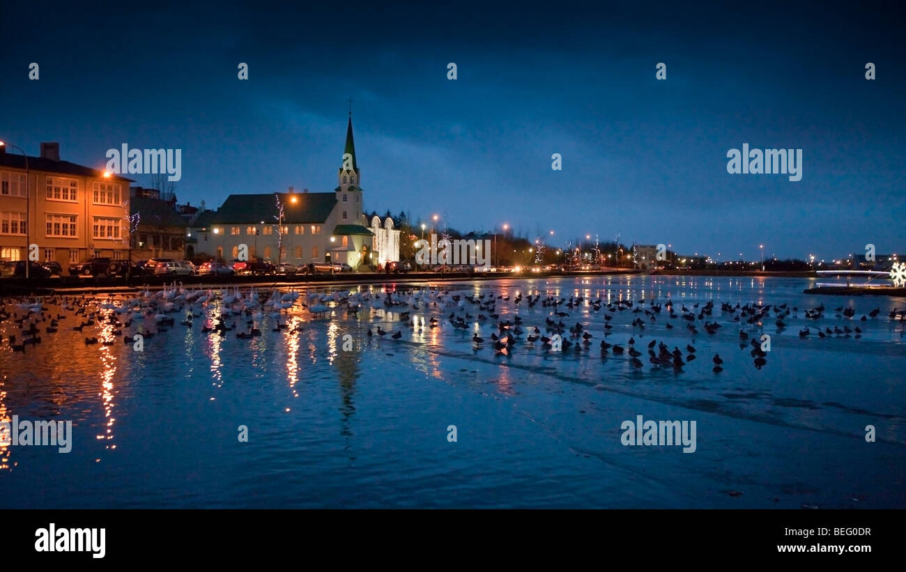 Canards dans Tjornin (étang), Reykjavik, Islande Photo Stock