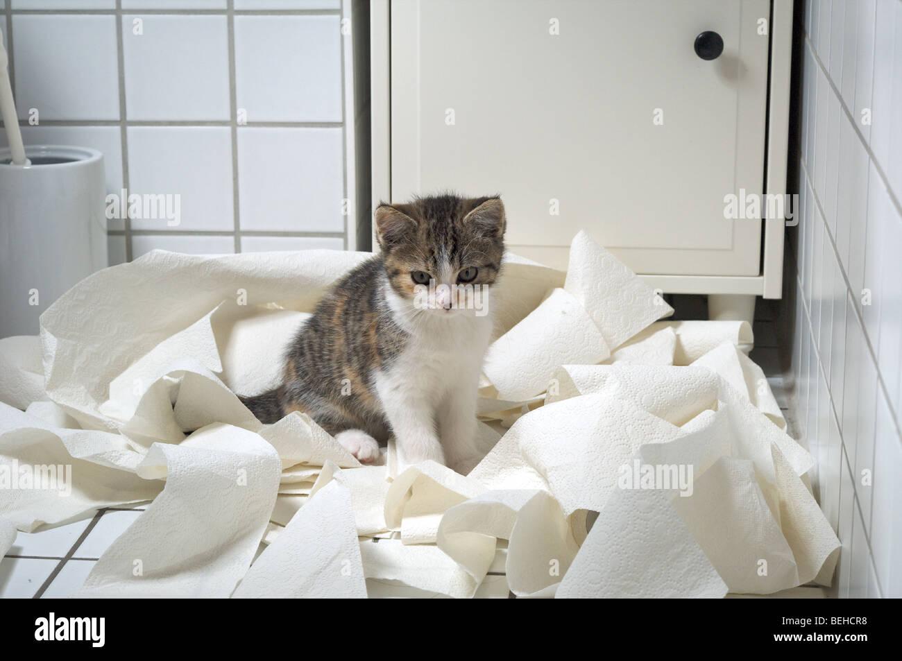 Chaton est assis dans beaucoup de papier toilette Banque D'Images