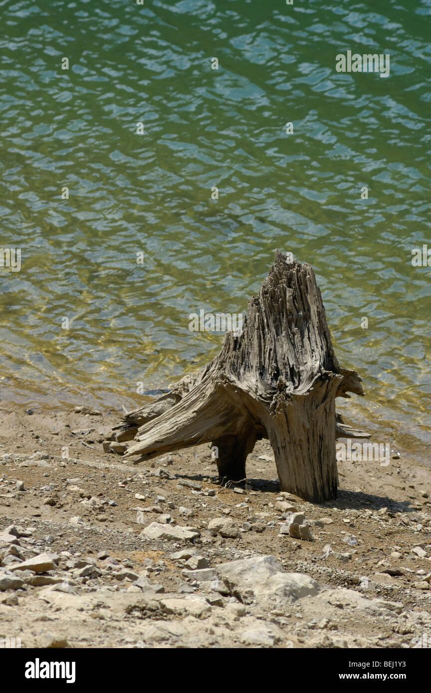 Morceau d'un arbre séché sur une rive du lac Lokvarsko jezero près de Lokve dans Gorski Kotar, Photo Stock