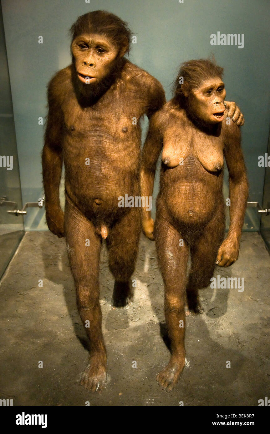 L'australopithecus couple- pièce à l'American Museum of Natural History, New York, hall des origines Photo Stock
