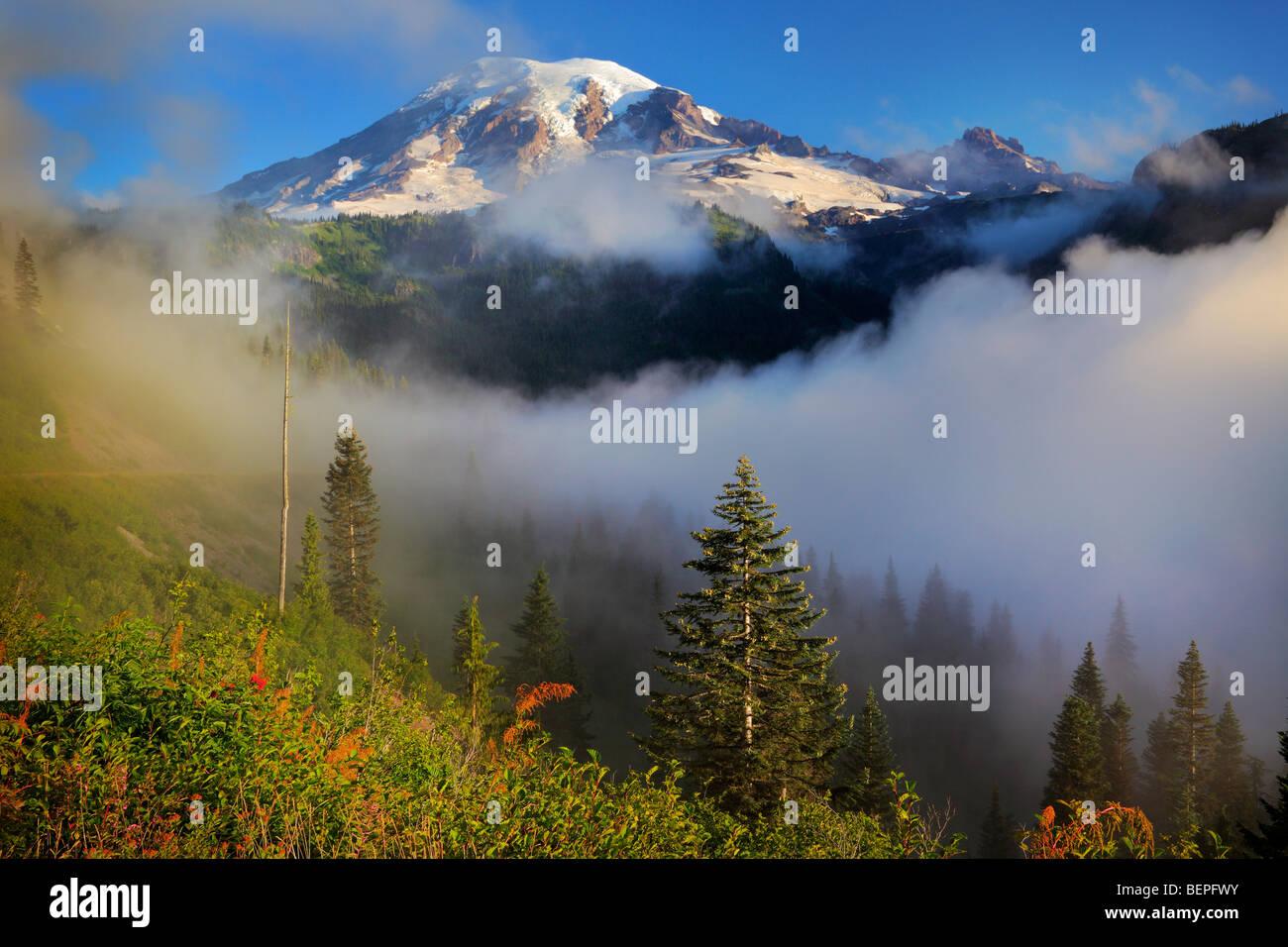 Le mont Rainier dans le brouillard Photo Stock