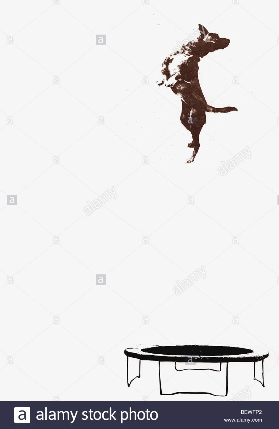 Chien de sauter sur le trampoline Photo Stock