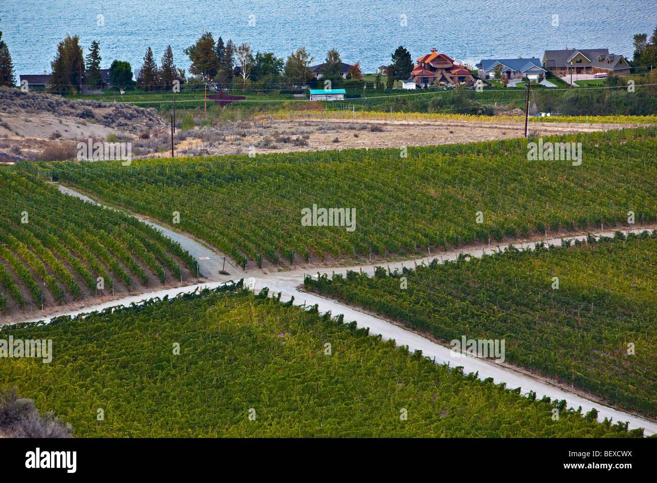 Carrefour entre les vignes près de la ville d'Osoyoos, région Okanagan-Similkameen, Okanagan, Colombie Photo Stock