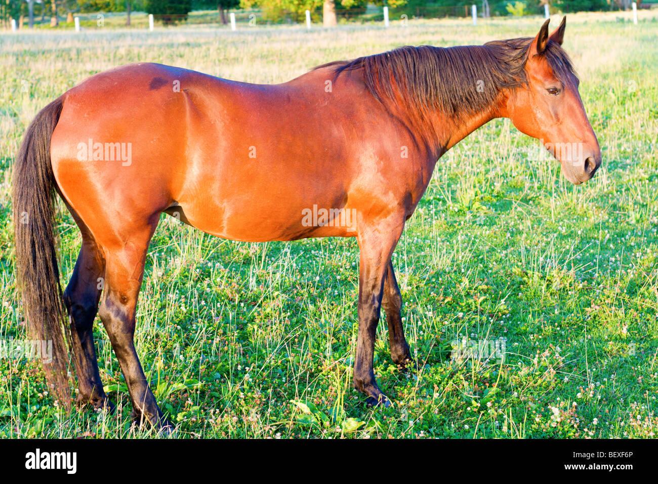 Horse Photo Stock