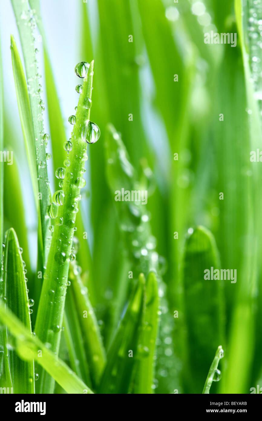 Une goutte de rosée sur l'herbe verte Photo Stock