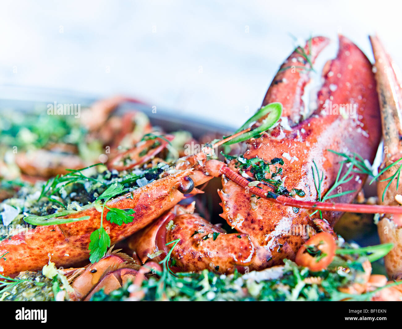 Homard préparé, close-up, en Suède. Photo Stock