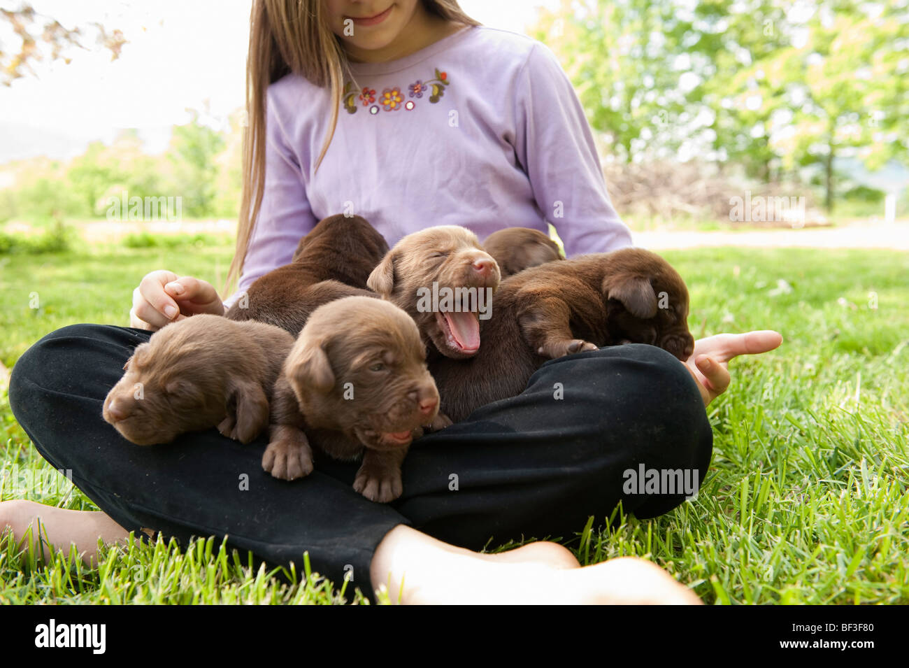 Chiots holding de l'adolescent Photo Stock