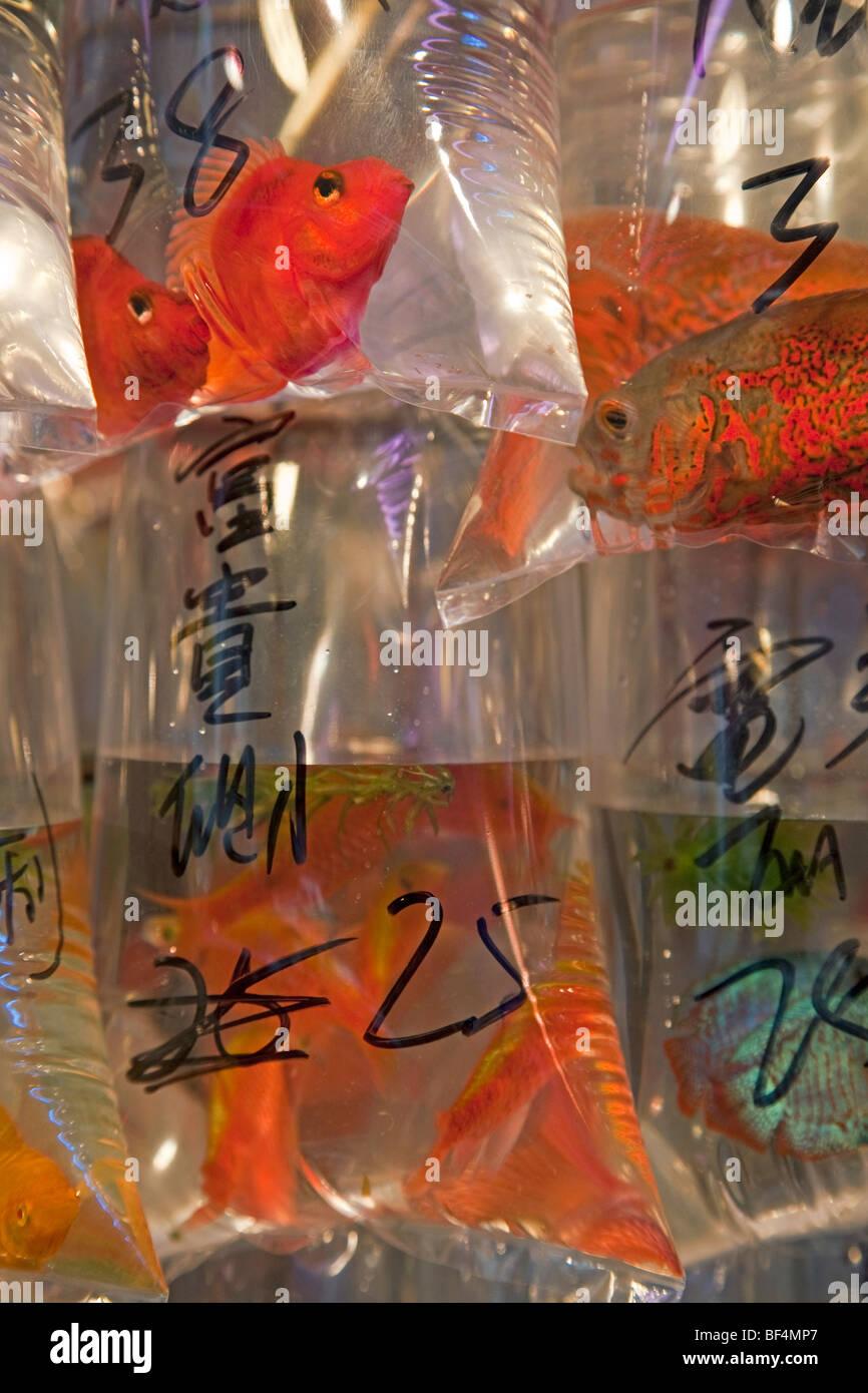 L'Asie, Chine, Hong Kong, Mongkok, le poisson dans un réservoir à Tung Choi Street, une rue pleine de magasins de Banque D'Images