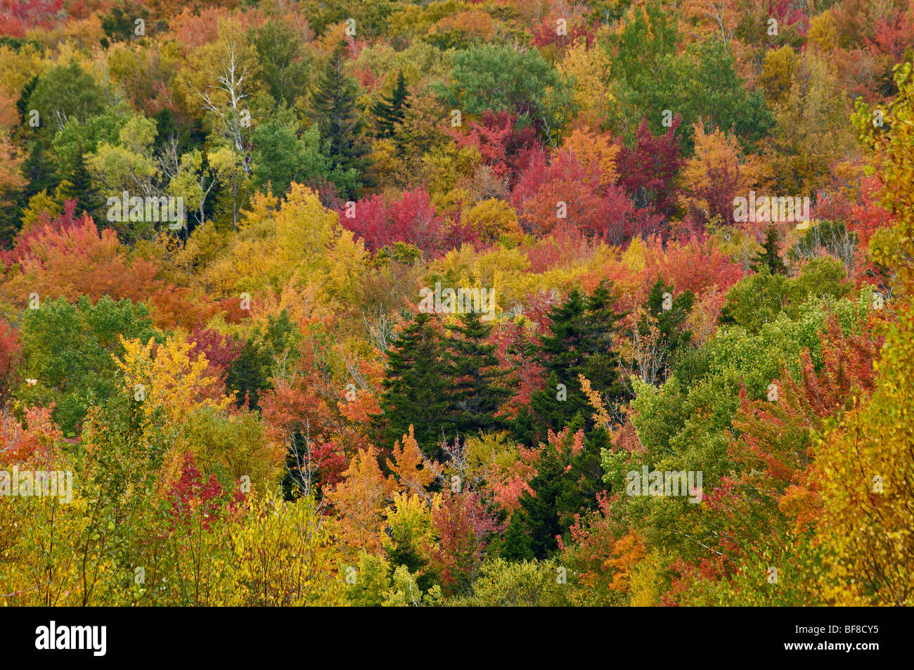 Patchwork de couleurs d'automne sur montagne en Franconia Notch dans les White Mountains National Forest dans Photo Stock