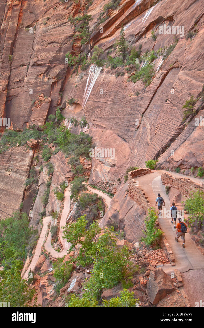 Les randonneurs monter en lacet sur West Rim Trail de Angels Landing Route à Zion National Park, Utah, USA Photo Stock