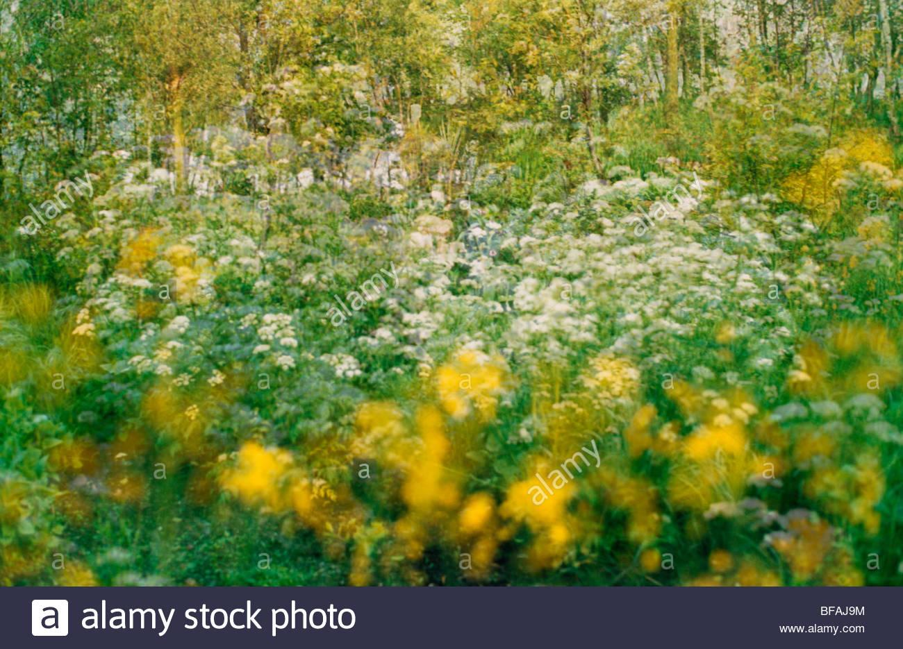 Fleurs sauvages, impression (composite), Pays-Bas Photo Stock